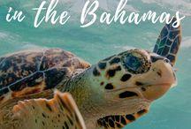 Bahamas Bucket List