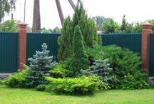 сад, садовые композиции