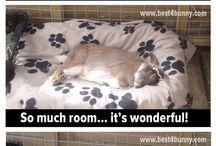 Bunnies :-)