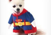 강아지옷 / 특이하고 예쁜 강아지 옷 들