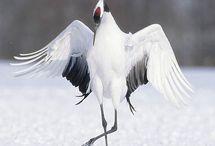 Turna (Crane)
