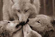 La loba...