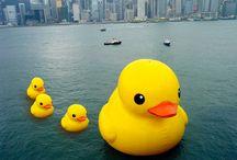 RubberDuck.Duck.