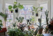 цветы и комнатные растения