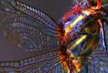 Dragonflies and...