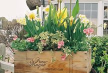 Spring Crate