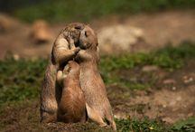 Family in Animal's World