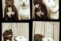 It's a DOGGIE dog WORLD. / Dogs / by Dana Bassiri