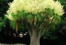 drzewa kwitnące i kwiaty