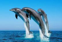 Nel Mare del Caraibi con Catamaranocaraibi / Nel Mare dei Caraibi con i delfini in occasione di una crociera ai Caraibi, ma anche con escursioni sotto il  mare, sempre a a bordo dei nostri Catamarani, ecco le Crociere ai Caraibi con http://www.catamaranocaraibi.com/