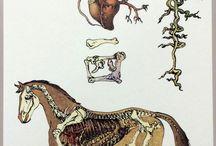 bone plus other