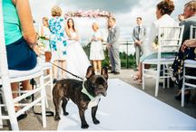 Pets at weddings / Dogs, cats, horses etc at weddings