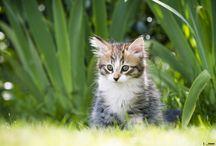 Mon petit Tigre