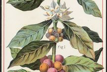 botanicals / by Emily Banks