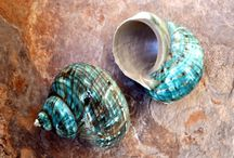 Seashell Mart / Seashells and Marine Life