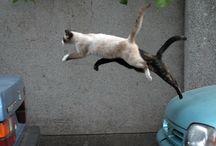 Gatti Cat