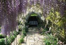 Garden Inspiration / by Lindsey Hellwig