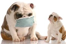 Dog Care and Health tips / Dog care information articles and photos photos, usefull tips.  Join our comunity http//:2puppies.com