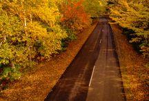 Fall / by Chris Welker