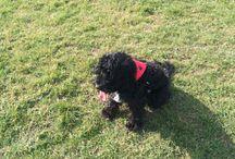 Eliza / Dog bandana