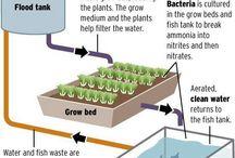 aquaponic , hydroponic & Greenhouses