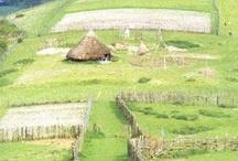 Livres sur l'agriculture gauloise / Idées de Lecture