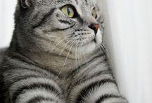 animals: all meow meows / meow?