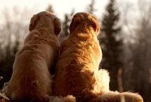 Dogs / by Meg Cupman