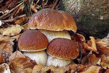 grzyb - mushrooms / zdjęcia grzybów