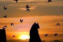 siluetas en puestade sol