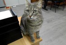 Persi e trovati / Link condivisi da altri siti per aiutare chi ha perso il suo gatto o cane.