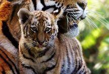 Belleza Animal del Mundo
