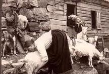 Goats / by Bethany Shafer Boyd