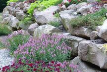Rad Rock Gardens