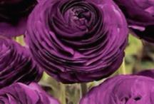 Flowers I love / by Deseray Rivas
