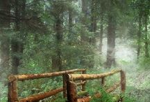 Charming Forest