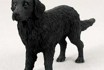 Flat Coated Retrievers / Flat Coated Retriever Products
