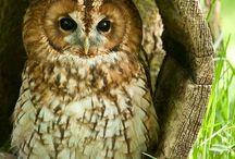 Animals - Owls & Co