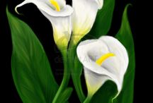 Lilies for Liam -Flower