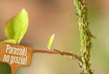 Giardinaggio - rimedi parassiti piante