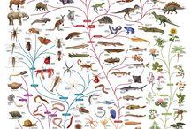 School project dierenrijk