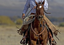 Rough & Tough Cowboy Stuff / For the hot working' man to make him look even sexier, durable, easy care and even easier to look at cowboy shirts.