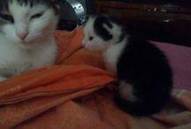 l miei Tesori / Nocciolina,  Pimpa e i suoi cuccioli Memole e Leo