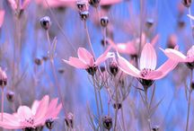 Colore in flowers