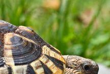 Turtles / Animals