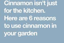 Cinnamon uses