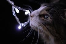 My Cat Vincent