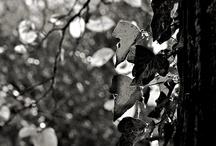 Black - white World / by Svetlana Timoshenko