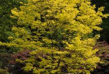 Plants: Great Trees
