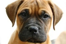 Puppy Dogs ;) / by Julie Warren